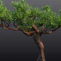 مدل سه بعدی درخت ، به سبک درخت های یمن
