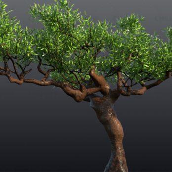 مدل سه بعدی درخت ، به سبک درخت های یمن با کیفیت بسیار بالا