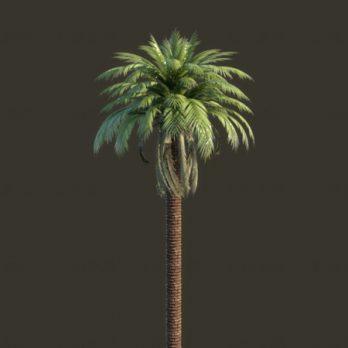 مدل سه بعدی درخت خرما ، Palm tree 3D Model