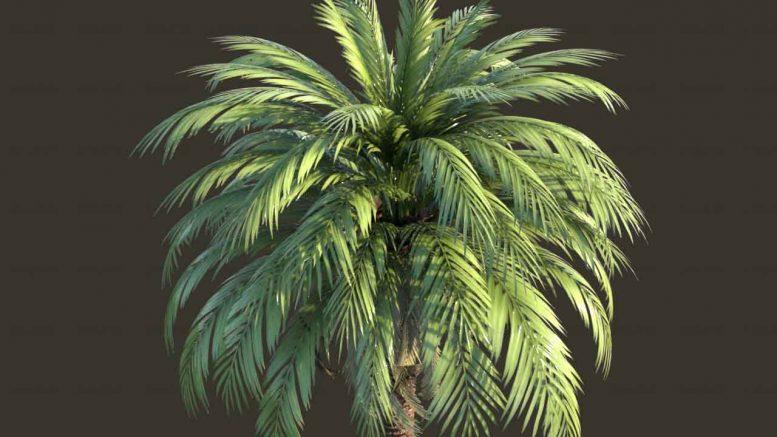 مدل 3D درخت خرما