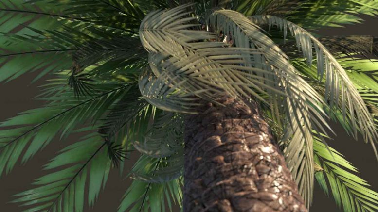 درخت خرما سه بعدی